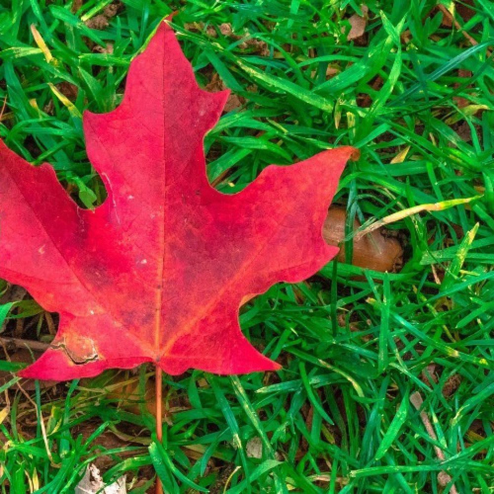 Happy Canadian Wine Day!